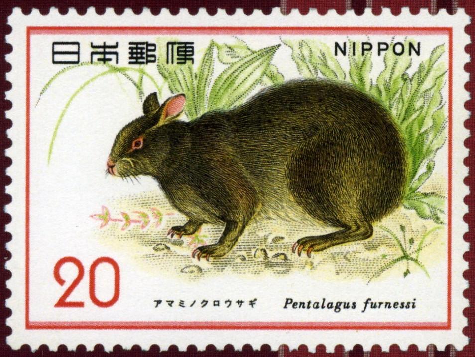http://blog-imgs-23.fc2.com/y/o/s/yosukenaito/20070427002838.jpg