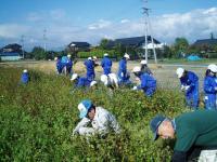 東条でソバ刈り入れH201028