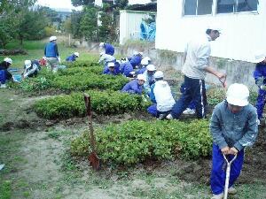落花生収穫H201107