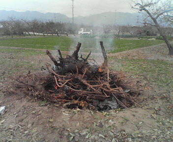野焼きH201111