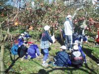 総合学習リンゴのスケッチH201114