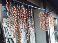 干し柿の状況H201117