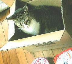 箱詰め直前
