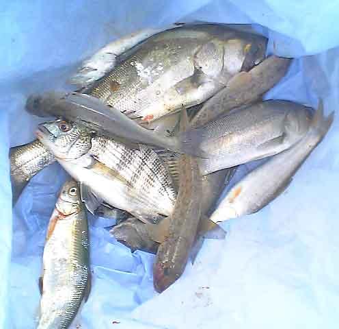 釣りの成果
