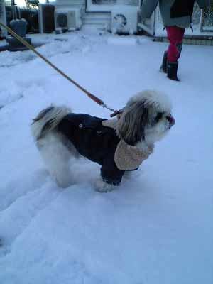 積もった雪の中