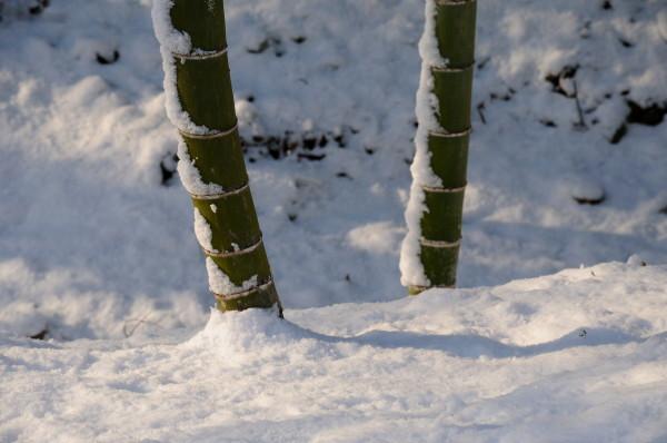 雪の両足寺他 077