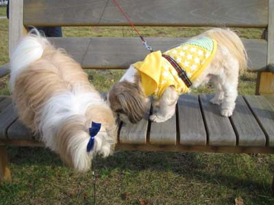 公園でライス君と散歩