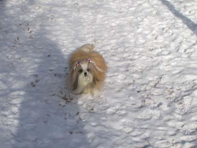 雪の中のまっぴー