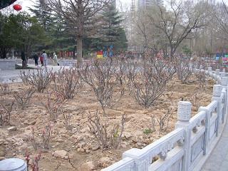 王城公園5