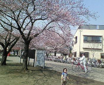 20080326正義桜川公園