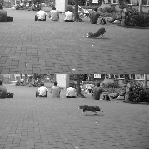 A公園のネコー1