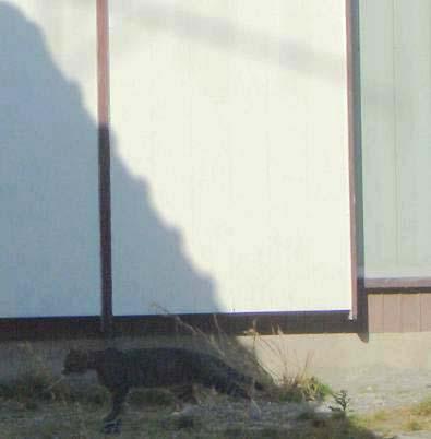 11・9影猫