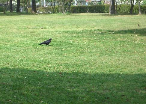 公園の鳥1
