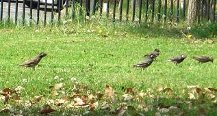 公園の鳥3