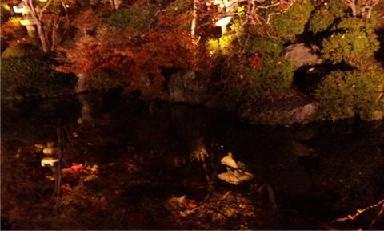 水に映った木3