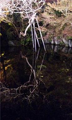 水に映った木