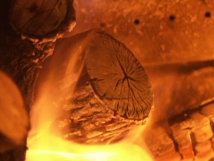 1620-ウバメガシ2