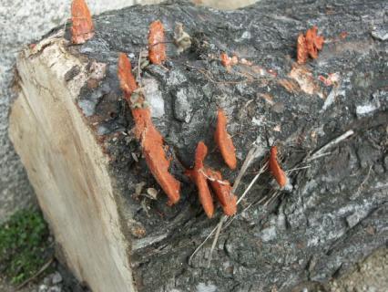 薪の整理03