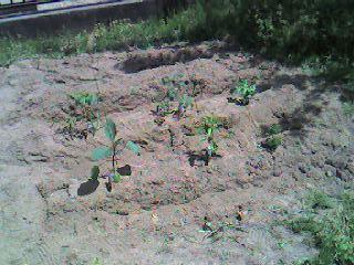 garden_after.jpg