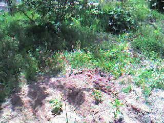 garden_after2.jpg