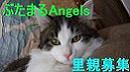 img9de7c87czik3zj_20091218001603.jpg