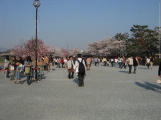 20050409_arashiyama-02.jpg