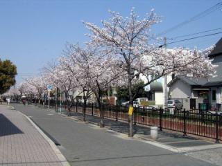 20050409_nagase-river.jpg