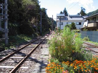 20061008_shinshimashima-03.jpg