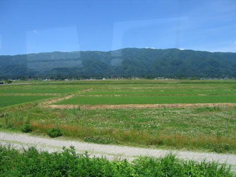 20070617_flower_nagai_line-03.jpg