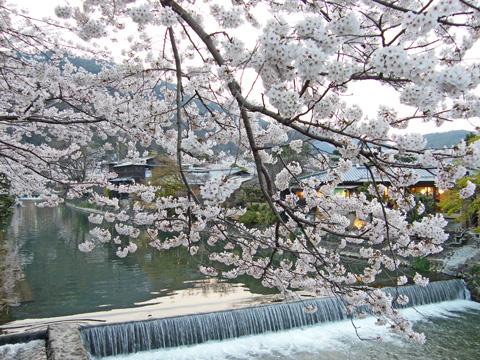 20080405_arashiyama_park-01.jpg