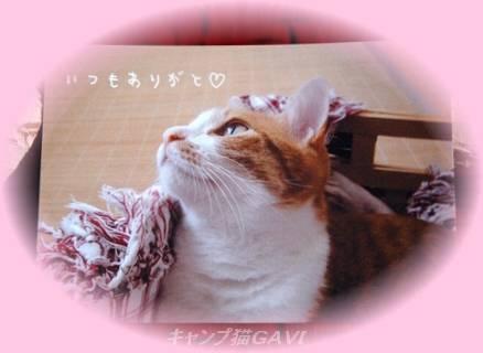081113Ohji_9721.jpg
