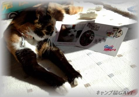 081113sakurachan_9738.jpg