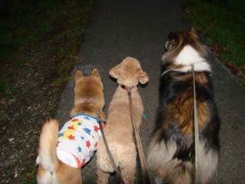 お散歩中です