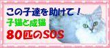 子猫成猫80匹SOS ブログ