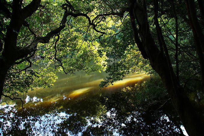 光射し込む冬の古池