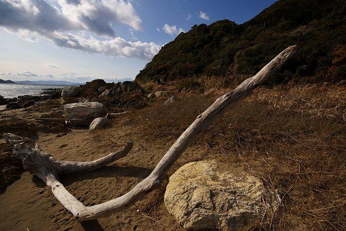 伊良湖岬 冬