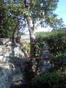 立木伐採・屋根草処理