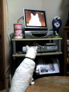 TVに……「あれ?」